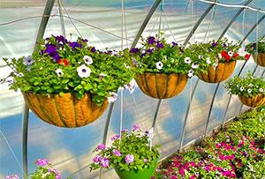 Hillside Nursery and Garden Center